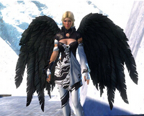 激战2新的黑色羽翼背饰造型视频预览